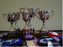 Intro and Elementary Trophies